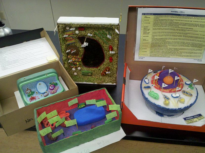 Plant Cell Model Shoebox – images free download