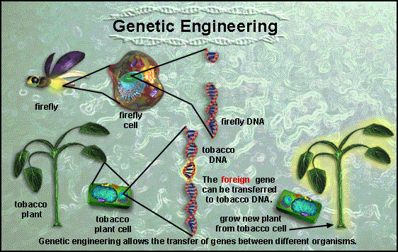 genitic engineering techniques An overview of information about genetic enhancement research from the july 2002 ethical it is possible that eventually enhancements using techniques initially intended to restore deficiencies could be redirected to improve when is a genetic intervention enhancing or.