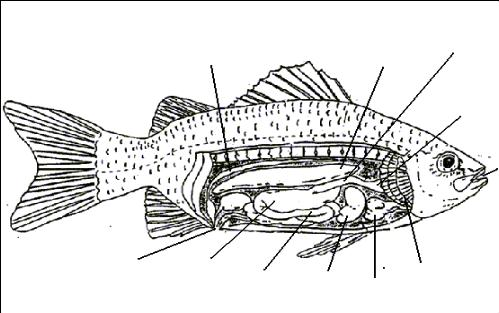 diagram of the perch diagram of the earth relative to the sun perch dissection #2